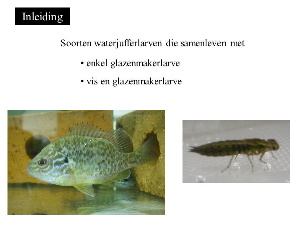 Inleiding Soorten waterjufferlarven die samenleven met enkel glazenmakerlarve vis en glazenmakerlarve
