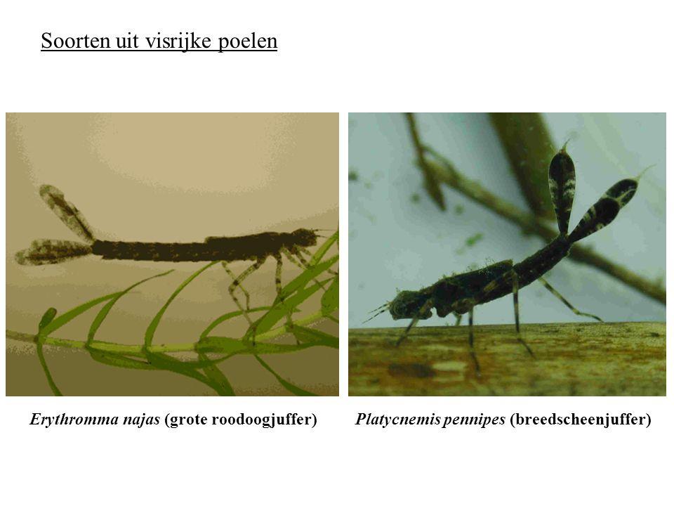 1 larve in bakje Pipettering  gesimuleerde aanval 9× per larve Respons?niet bewegen wegwandelen wegzwemmen  Voor de vier soorten telkens 24 replica's Experiment 2: wegvluchtgedrag