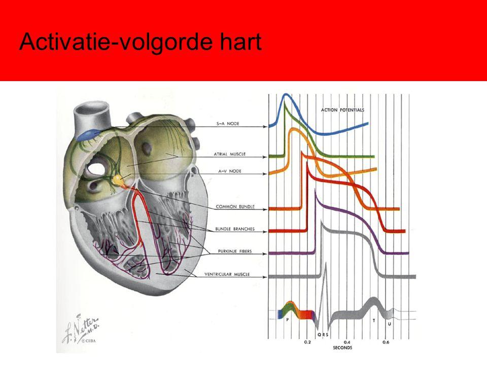 Activatie-volgorde hart