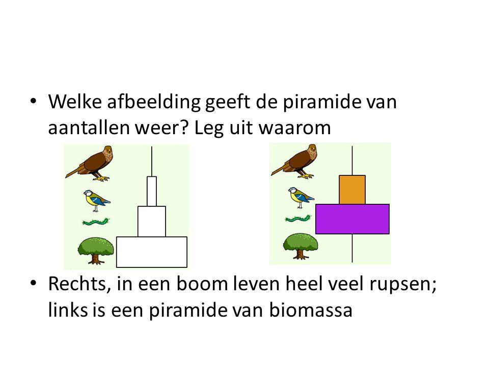 Welke afbeelding geeft de piramide van aantallen weer? Leg uit waarom Rechts, in een boom leven heel veel rupsen; links is een piramide van biomassa