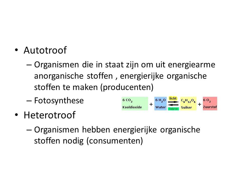 Autotroof – Organismen die in staat zijn om uit energiearme anorganische stoffen, energierijke organische stoffen te maken (producenten) – Fotosynthes