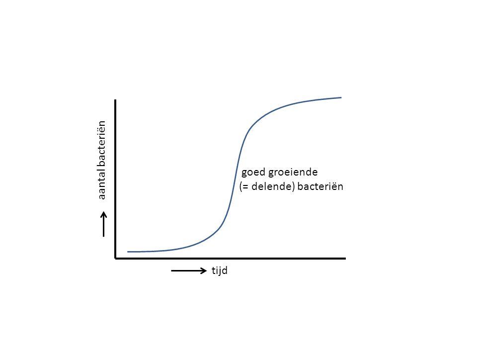tijd aantal bacteriën goed groeiende (= delende) bacteriën