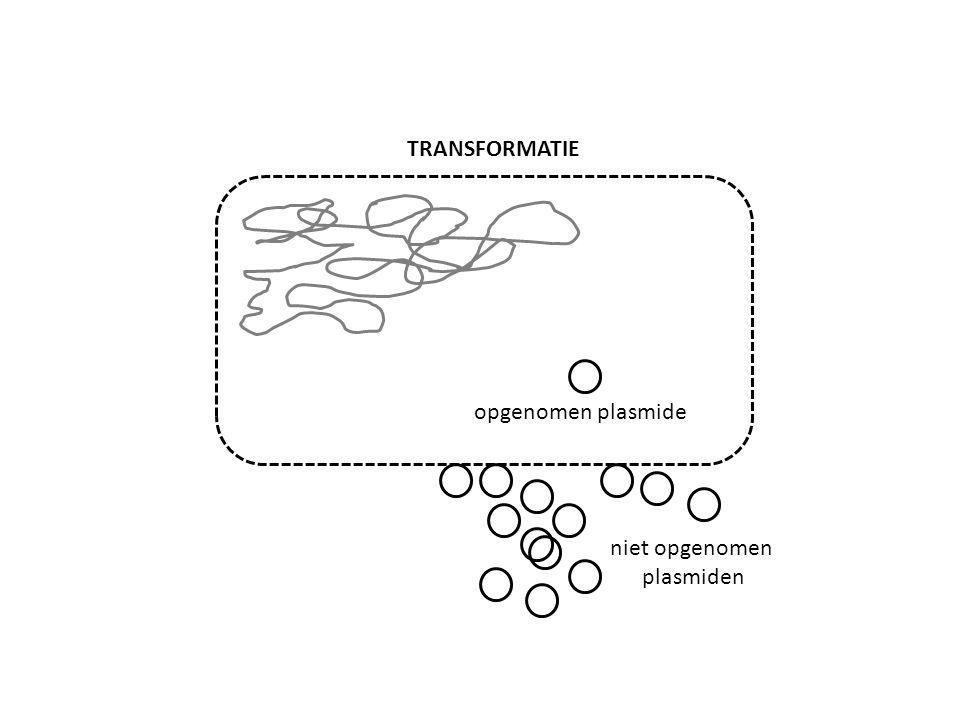 opgenomen plasmide niet opgenomen plasmiden TRANSFORMATIE