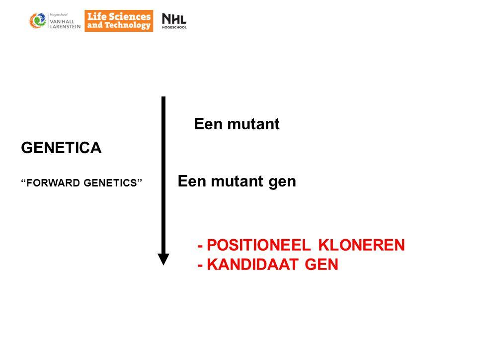 Een mutant Een mutant gen - POSITIONEEL KLONEREN - KANDIDAAT GEN GENETICA FORWARD GENETICS