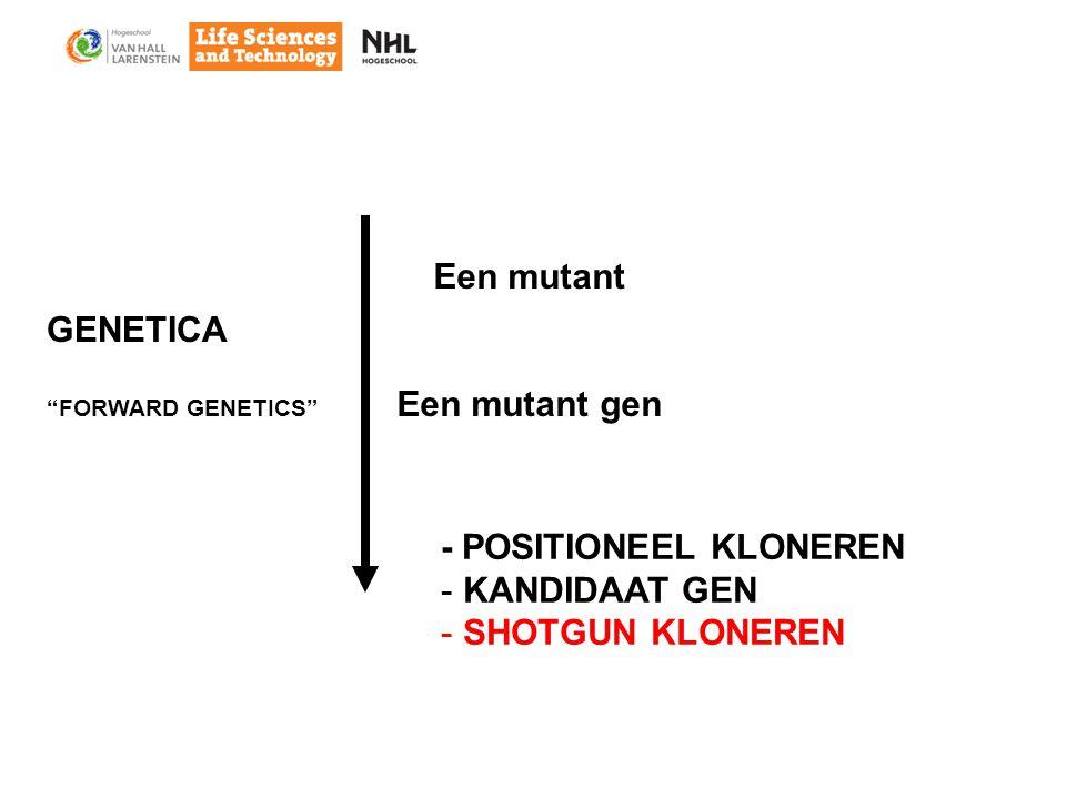 Een mutant Een mutant gen - POSITIONEEL KLONEREN - KANDIDAAT GEN - SHOTGUN KLONEREN GENETICA FORWARD GENETICS