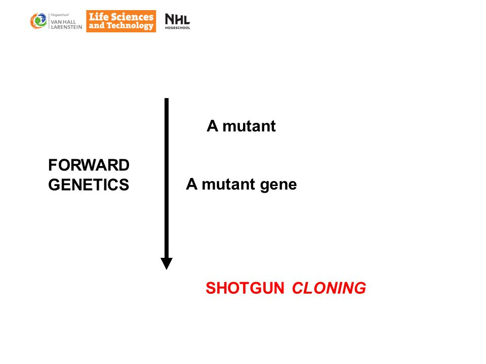 A mutant A mutant gene FORWARD GENETICS SHOTGUN CLONING