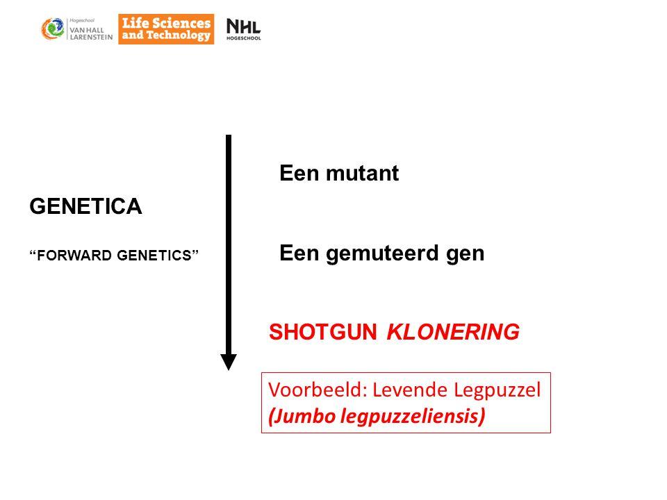 Een mutant Een gemuteerd gen SHOTGUN KLONERING Voorbeeld: Levende Legpuzzel (Jumbo legpuzzeliensis) GENETICA FORWARD GENETICS