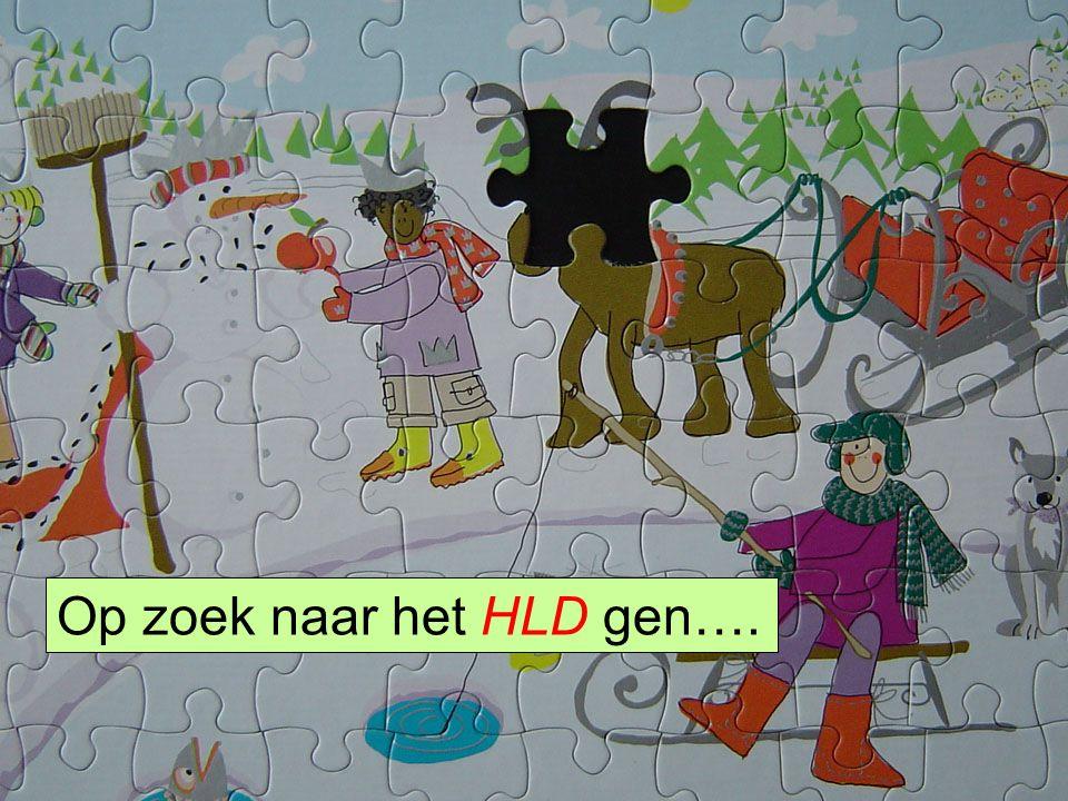 HLS41 Gene Hunting Op zoek naar het HLD gen….