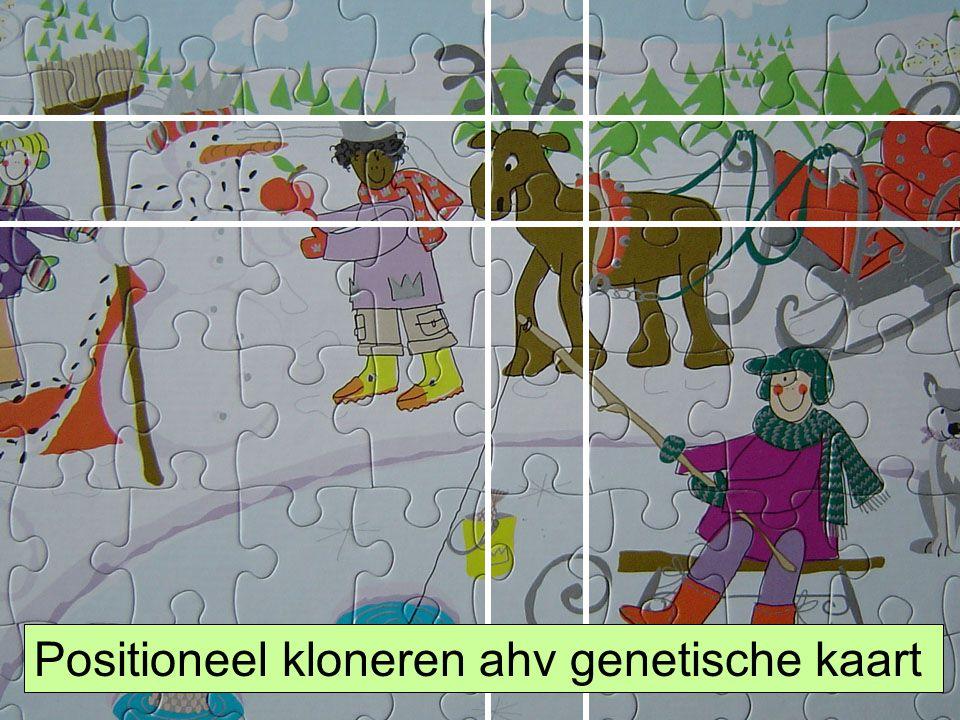 HLS41 Gene Hunting Positioneel kloneren ahv genetische kaart