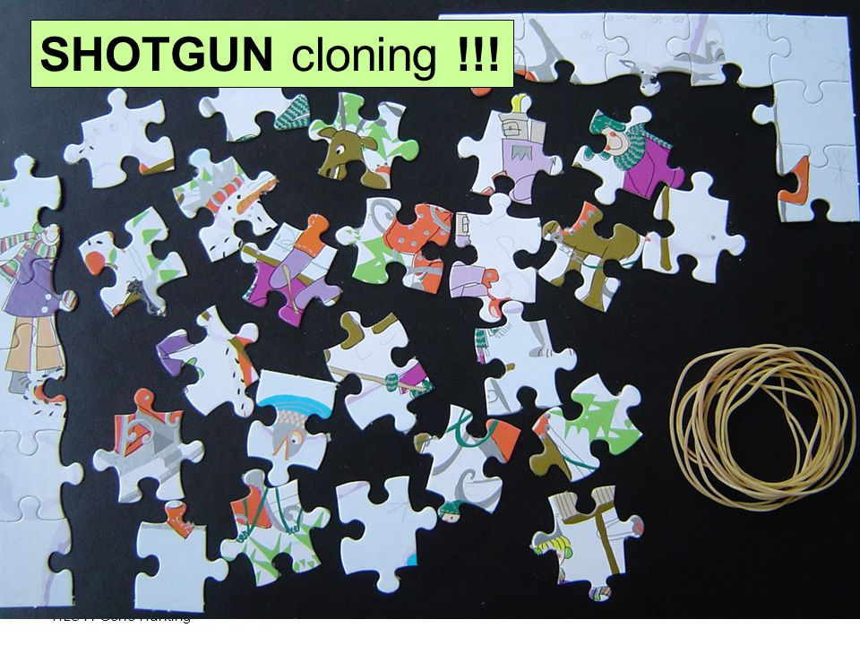 HLS41 Gene Hunting SHOTGUN cloning !!!