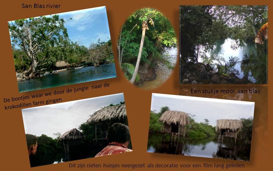 Fruit dorpje Guiayabitos Onderweg naar de Jungle San Blas stopten we bij een snoepkraam van vers fruit.