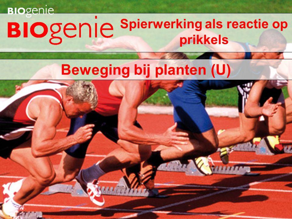 Beweging bij planten (U) Spierwerking als reactie op prikkels