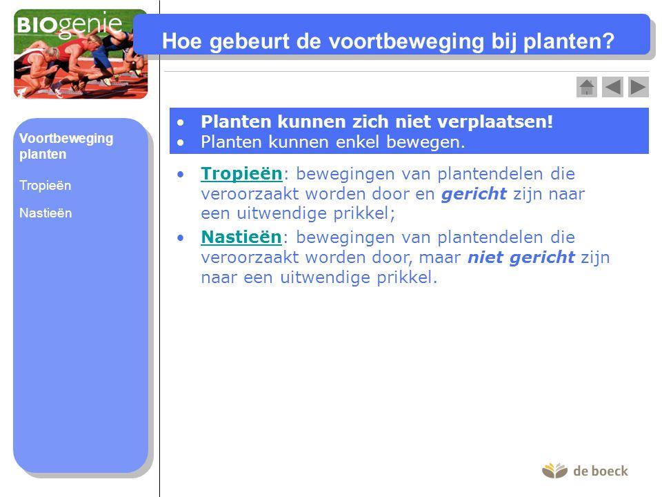 Hoe gebeurt de voortbeweging bij planten? Planten kunnen zich niet verplaatsen! Planten kunnen enkel bewegen. Tropieën: bewegingen van plantendelen di