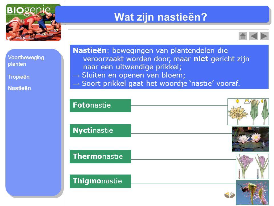 Wat zijn nastieën? Nastieën: bewegingen van plantendelen die veroorzaakt worden door, maar niet gericht zijn naar een uitwendige prikkel;  Sluiten en