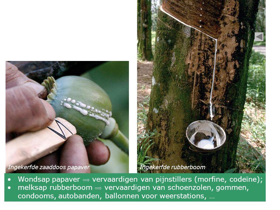Gestolde hars op schors van een naaldboom Hars = taai, kleverig product in harskanalen van vooral naaldbomen Dwarsdoorsnede stengel den Harskanaal