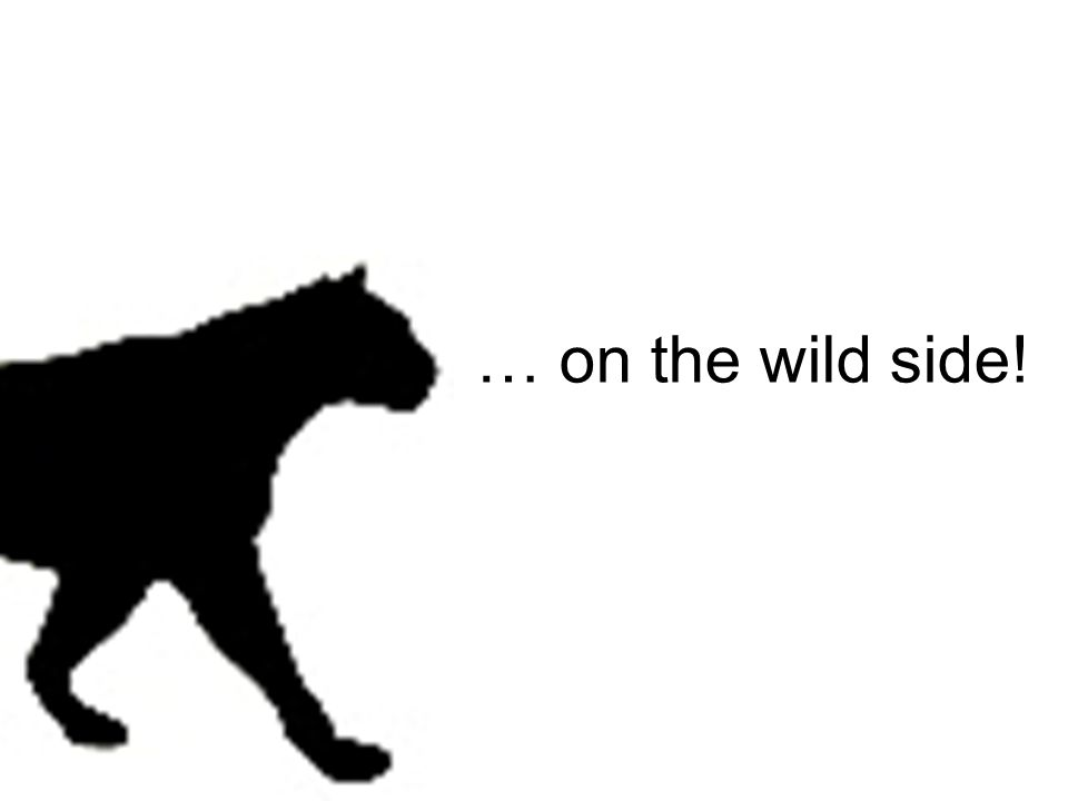 … on the wild side!