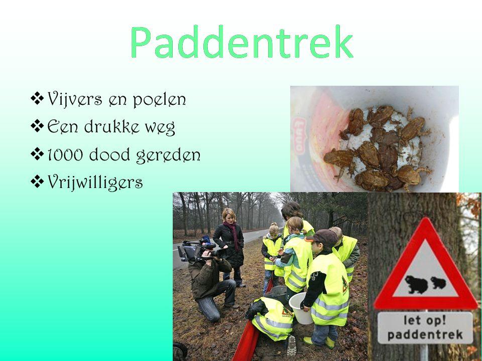  Vijvers en poelen  Een drukke weg  1000 dood gereden  Vrijwilligers Paddentrek