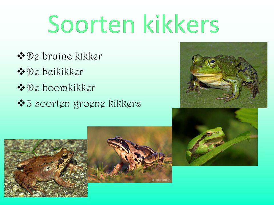  De bruine kikker  De heikikker  De boomkikker  3 soorten groene kikkers Soorten kikkersSoorten kikkers