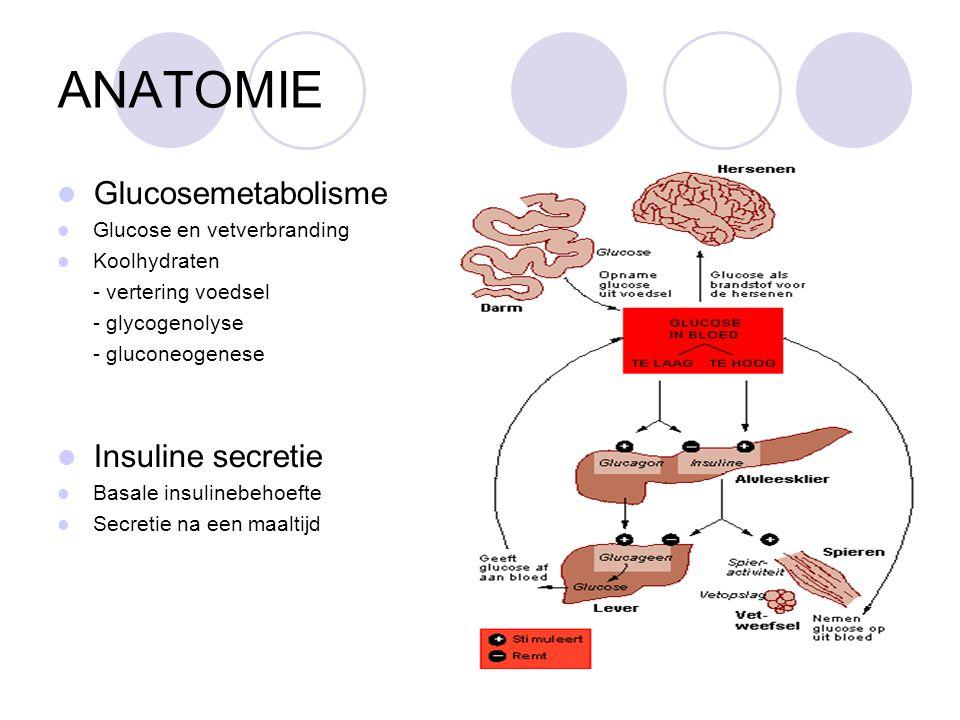 ANATOMIE Glucosemetabolisme Glucose en vetverbranding Koolhydraten - vertering voedsel - glycogenolyse - gluconeogenese Insuline secretie Basale insulinebehoefte Secretie na een maaltijd