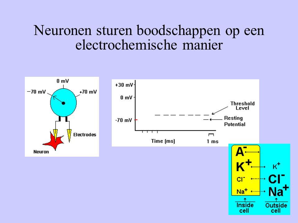 19 Neuronen sturen boodschappen op een electrochemische manier