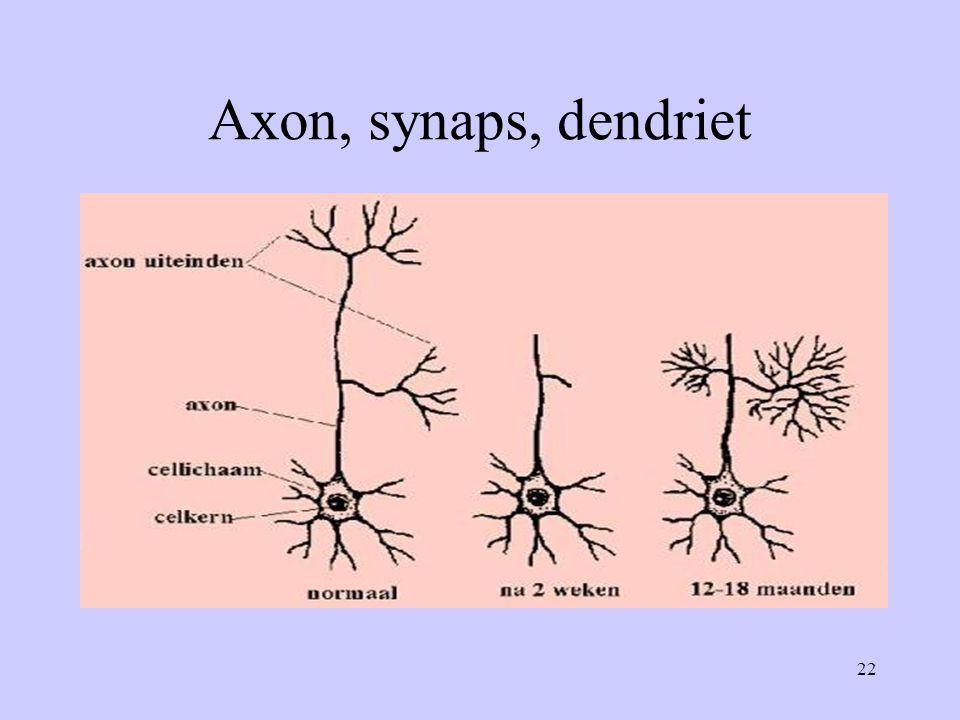 22 Axon, synaps, dendriet