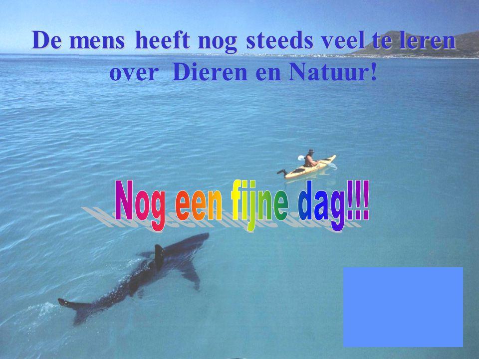 Een Haai, Een Man, En een dankbaar hart voor redden van MYN LEVEN!