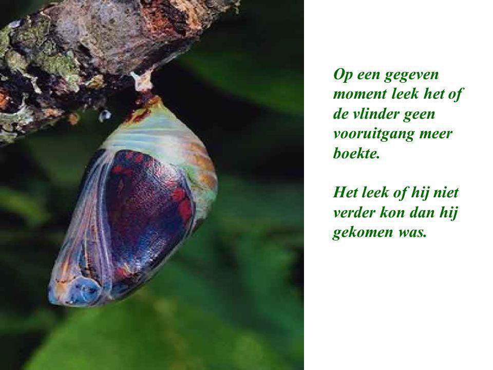 """De Les van de Vlinder """"Op een dag, verscheen er een kleine opening in een cocon. Een man zat uren te kijken hoe de vlinder zijn lijf door de kleine op"""