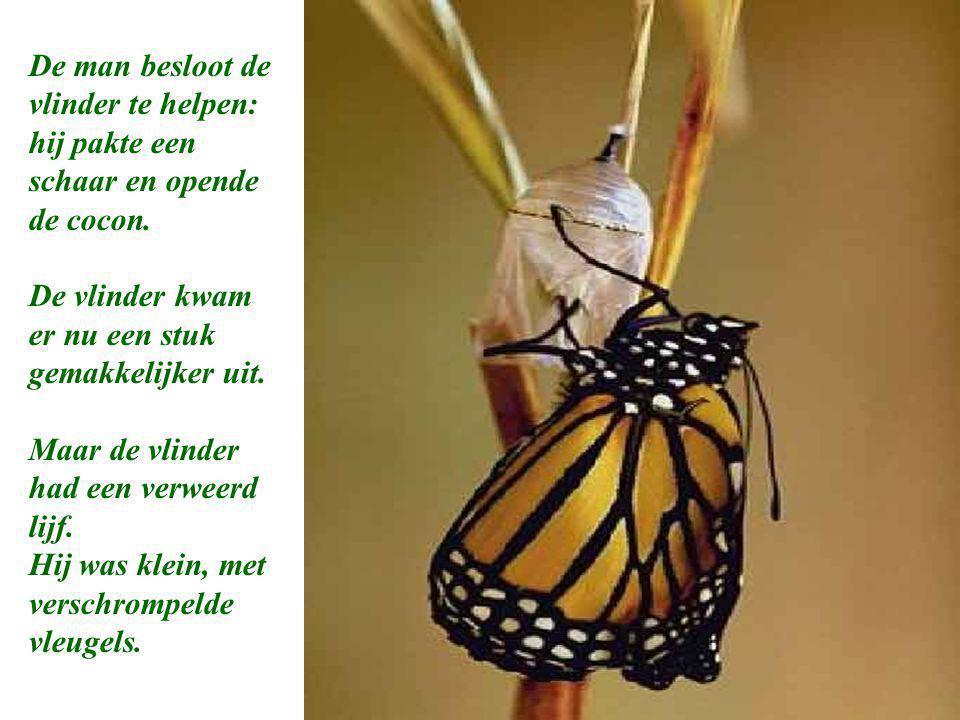 Op een gegeven moment leek het of de vlinder geen vooruitgang meer boekte. Het leek of hij niet verder kon dan hij gekomen was.