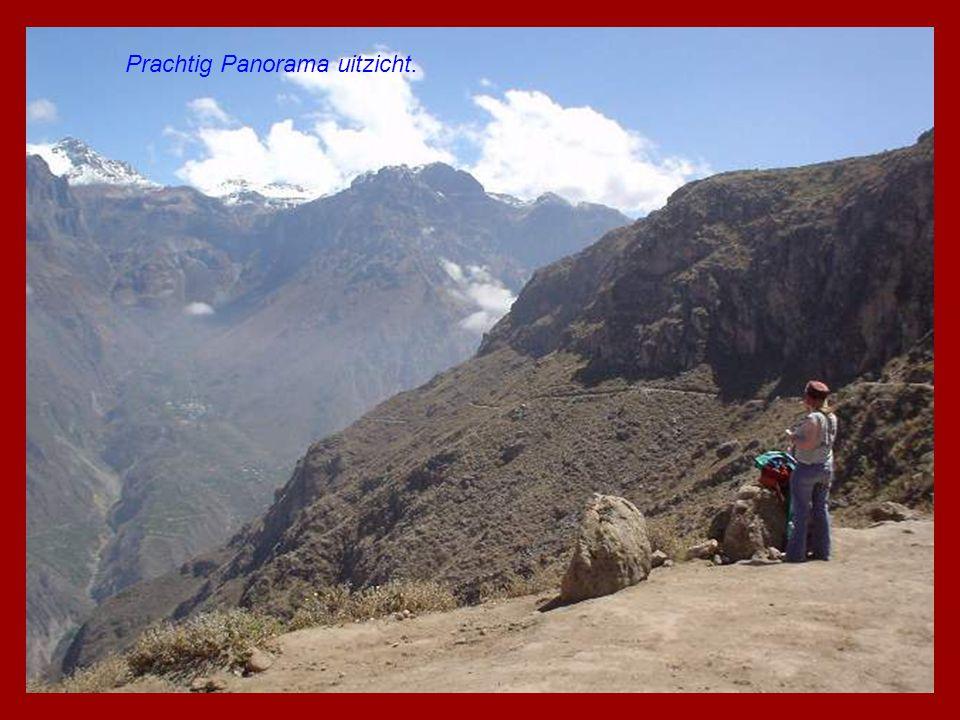 Maisvelden van nu. In de Andes Vally (Peru)