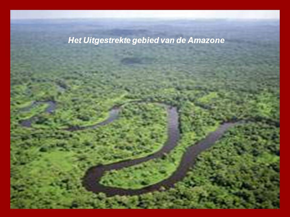 Het Uitgestrekte gebied van de Amazone