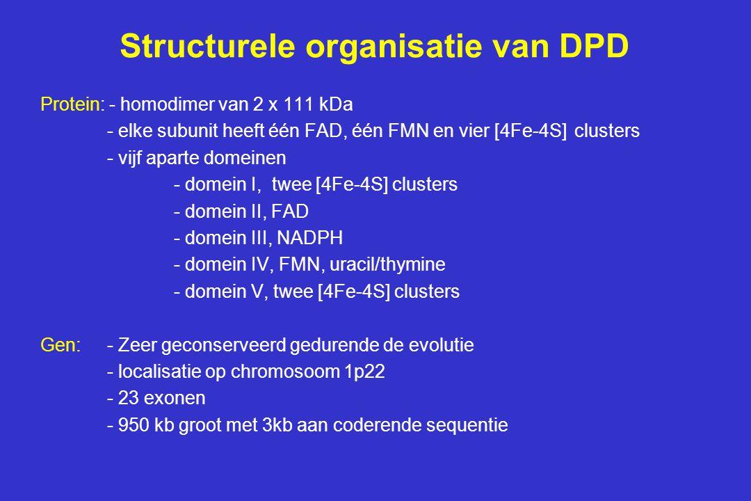 Structurele organisatie van DPD Protein: - homodimer van 2 x 111 kDa - elke subunit heeft één FAD, één FMN en vier [4Fe-4S] clusters - vijf aparte domeinen - domein I, twee [4Fe-4S] clusters - domein II, FAD - domein III, NADPH - domein IV, FMN, uracil/thymine - domein V, twee [4Fe-4S] clusters Gen:- Zeer geconserveerd gedurende de evolutie - localisatie op chromosoom 1p22 - 23 exonen - 950 kb groot met 3kb aan coderende sequentie