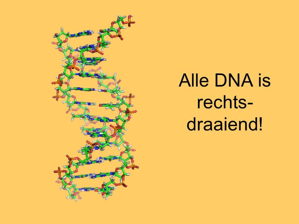 Alle DNA is rechts- draaiend!