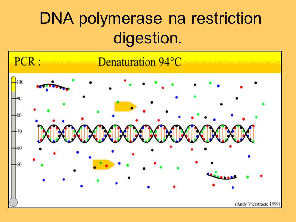 DNA polymerase na restriction digestion.