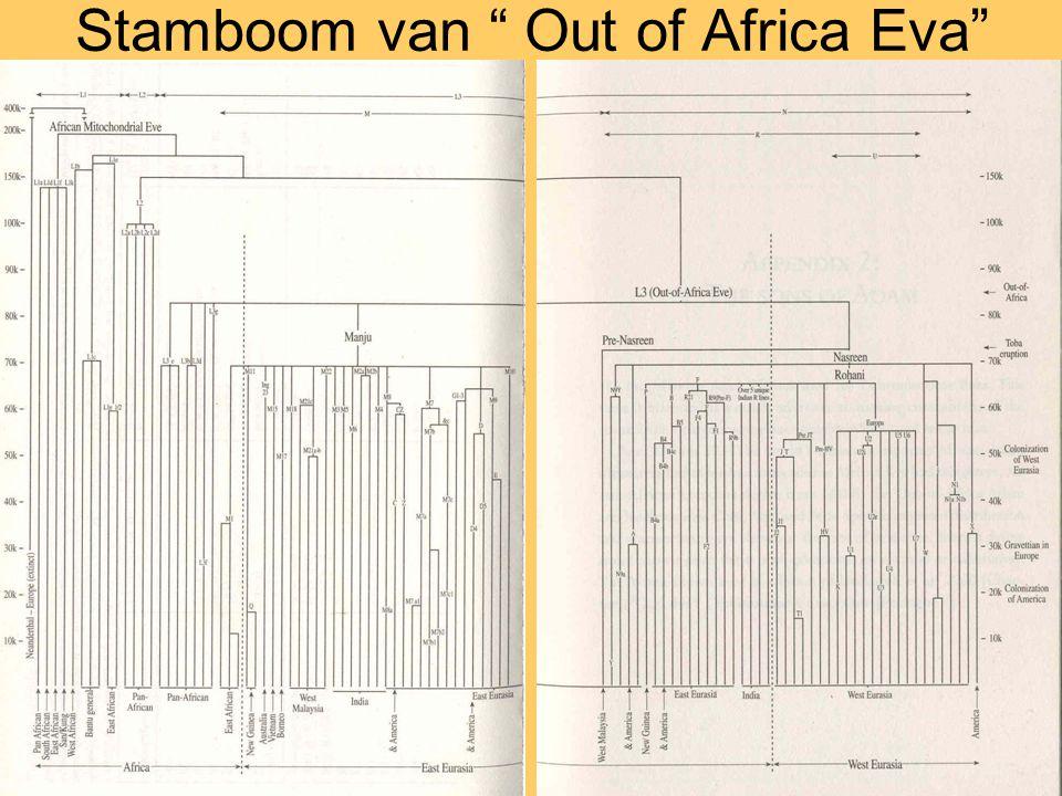 "Stamboom van "" Out of Africa Eva"""