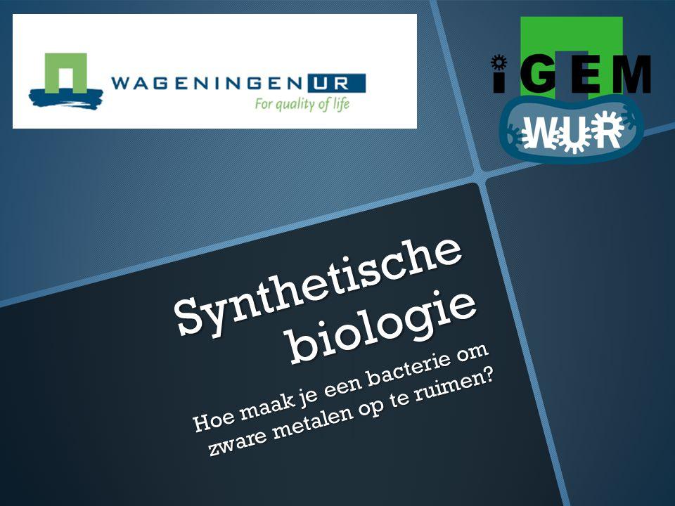 Wat is synthetische biologie?  Standaard bouwstenen  Plasmide