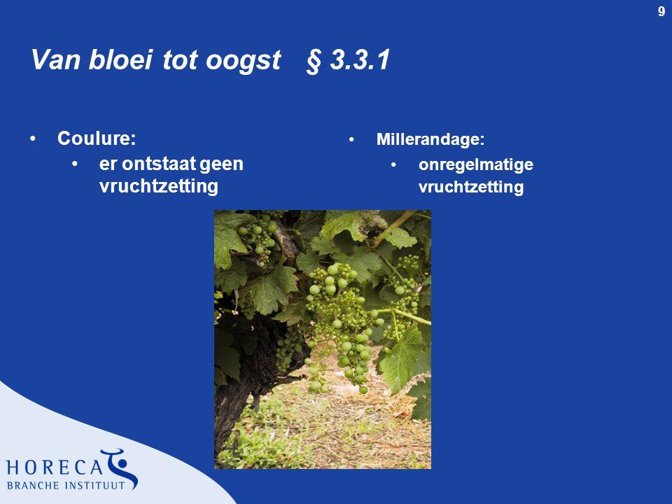 9 Van bloei tot oogst § 3.3.1 Coulure: er ontstaat geen vruchtzetting Millerandage: onregelmatige vruchtzetting