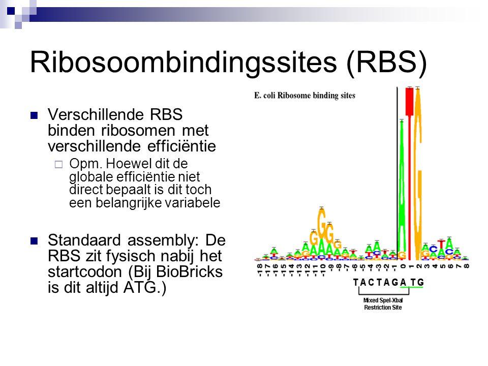Ribosoombindingssites (RBS) Verschillende RBS binden ribosomen met verschillende efficiëntie  Opm. Hoewel dit de globale efficiëntie niet direct bepa
