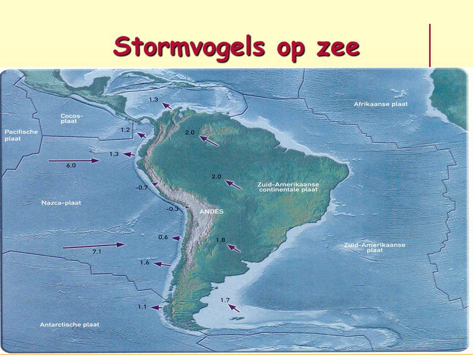 Stormvogels op zee