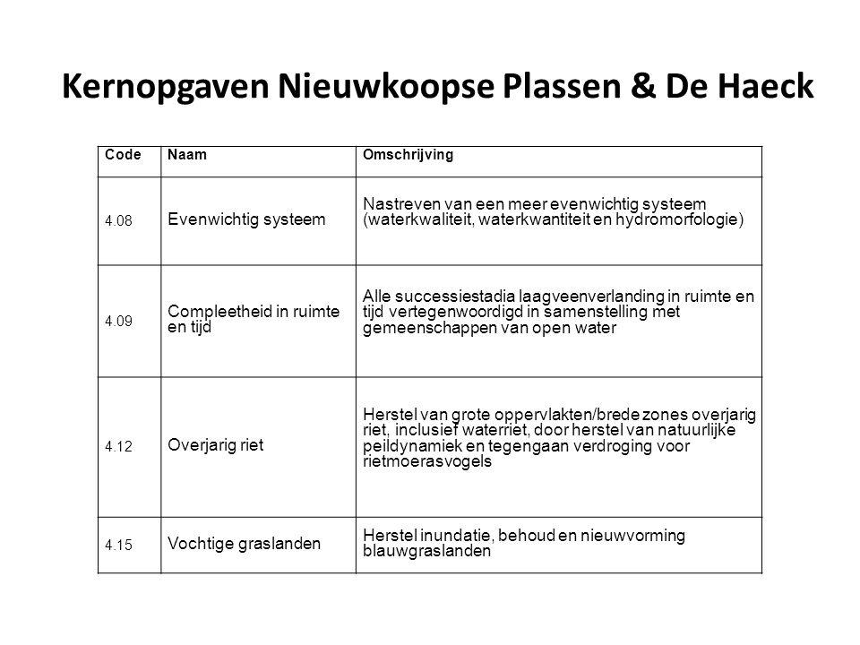Afbeelding uit het Nederlands Soortenregister, Foto Bram Koese, 15 mei 2007, Weerribben Gestreepte waterroofkever Graphoderus bilineatus