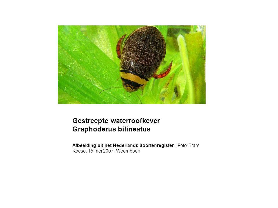 Verminderen wegzijging door opheffen onderbemalingen en peilopzet in de Meijegraslanden (inrichten EHS) Introduceren van flexibel peilbeheer in de Meijegraslanden (inrichten EHS) Peilopzet in de Natte as direct ten zuiden van het Natura 2000- gebied Mitigerende maatregelen na 2016