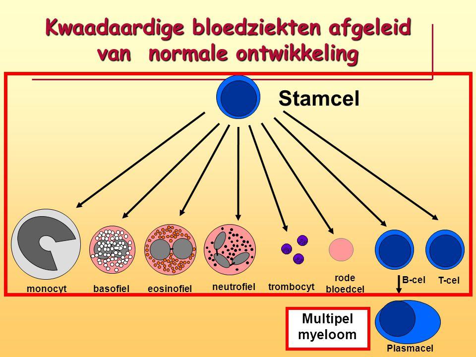 Kwaadaardige bloedziekten afgeleid van normale ontwikkeling Stamcel monocyt basofieleosinofiel neutrofiel T-cel B-cel rode bloedcel trombocyt Plasmace