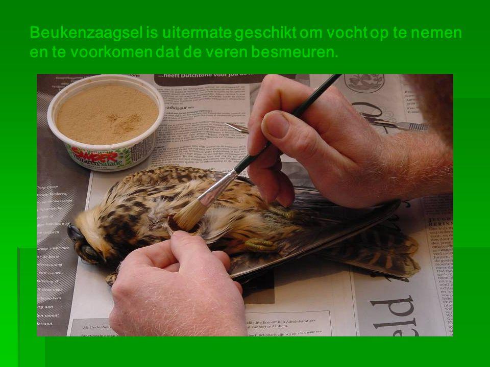 Beukenzaagsel is uitermate geschikt om vocht op te nemen en te voorkomen dat de veren besmeuren.