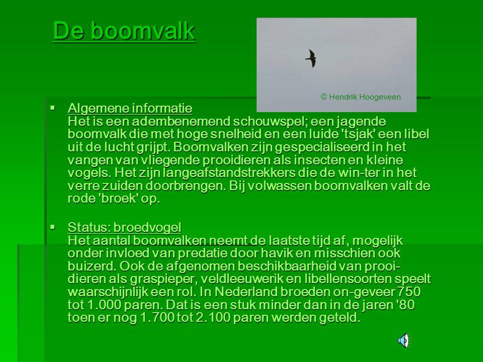 De boomvalk  Algemene informatie Het is een adembenemend schouwspel; een jagende boomvalk die met hoge snelheid en een luide 'tsjak' een libel uit de