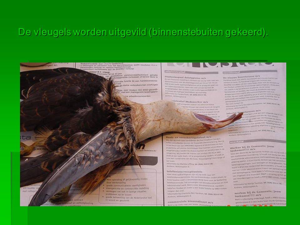De vleugels worden uitgevild (binnenstebuiten gekeerd).