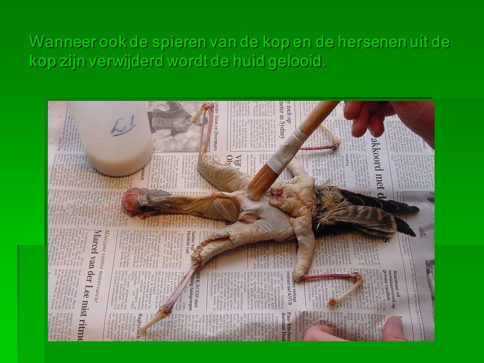 Wanneer ook de spieren van de kop en de hersenen uit de kop zijn verwijderd wordt de huid gelooid.