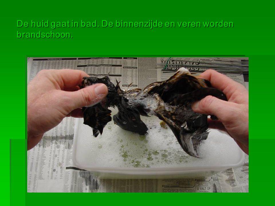 De huid gaat in bad. De binnenzijde en veren worden brandschoon.