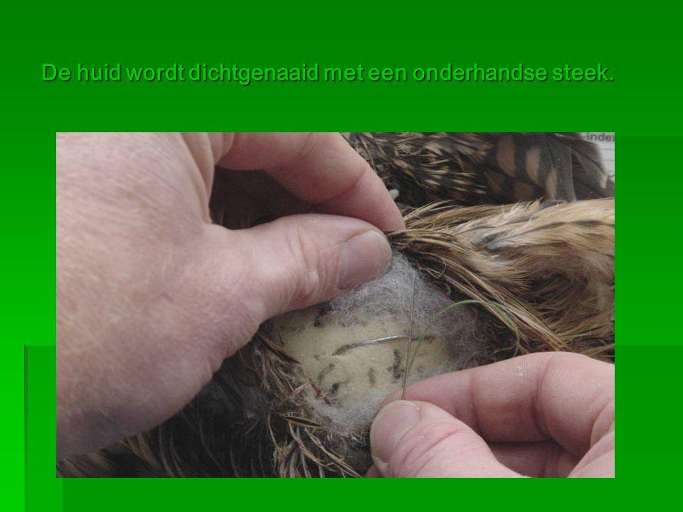 De huid wordt dichtgenaaid met een onderhandse steek.