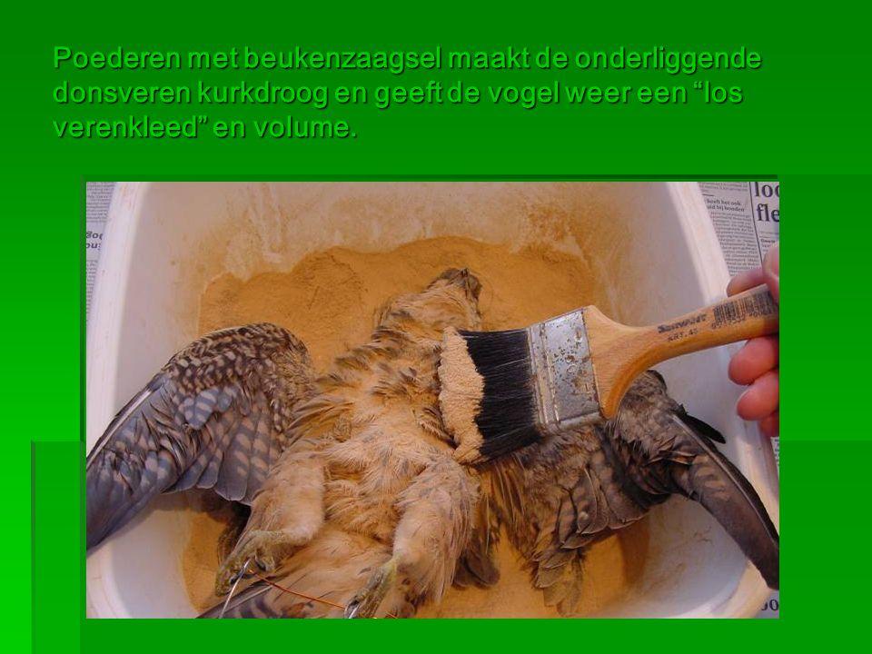 """Poederen met beukenzaagsel maakt de onderliggende donsveren kurkdroog en geeft de vogel weer een """"los verenkleed"""" en volume."""