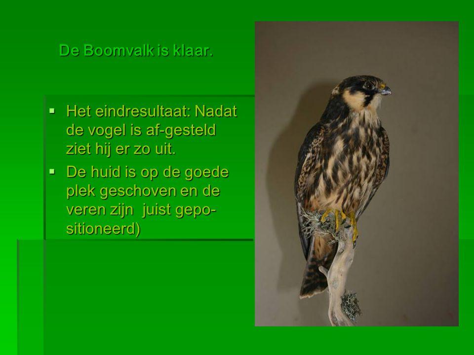  Bio-Visie Natuureducatieve Projecten Natuureducatieve Projecten Hendrik Hoogeveen De Steenkamp 94 3781VT Voorthuizen NL Tel.