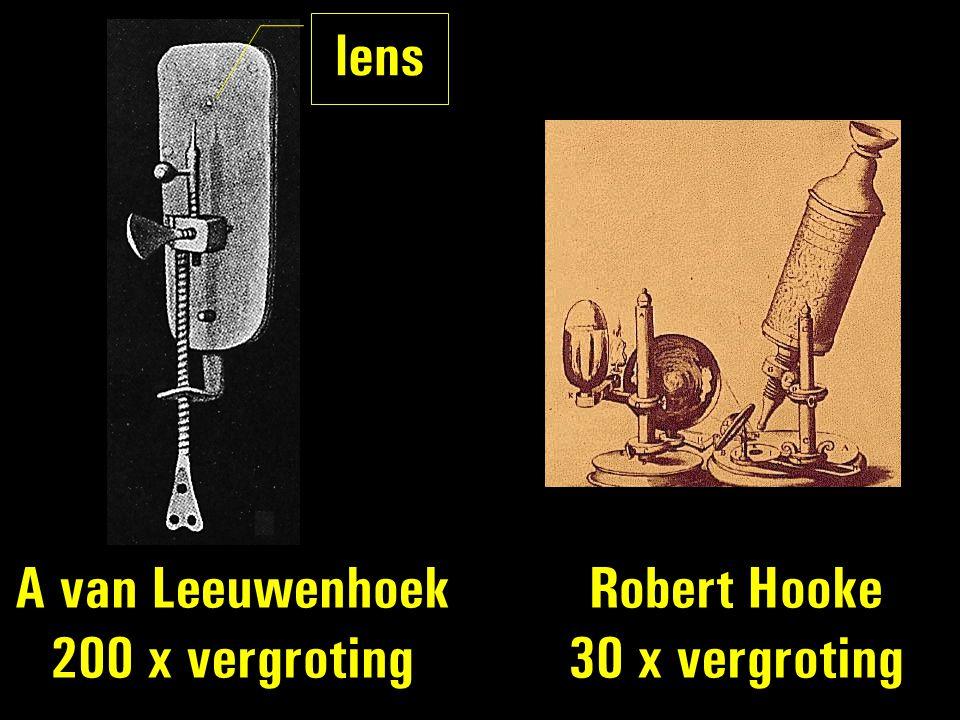 A van Leeuwenhoek 200 x vergroting Robert Hooke 30 x vergroting lens